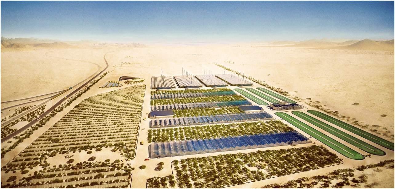 culktivos en el desierto